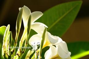 Hawaii Mindy Metivier Photography