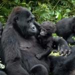 Bucket List: Gorilla Trekking