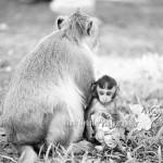 Wordless Wednesday | Angkor, Cambodia Travel Photographer
