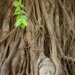 Wordless Wednesday | Ayutthaya, Thailand Travel Photographer